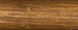 T0035 dub zlatý